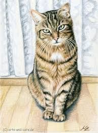 risultati immagini per how to draw realistic cats arte animali