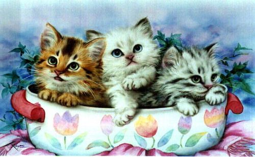 Cute Cat Art