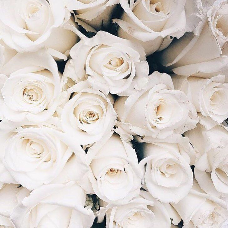 White Roses Roses White Pastel Photography Bouquets Plain Grunge Tumblr Flowers Photography Wallpaper White Roses Background White Roses