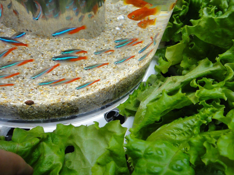 17 Best 1000 images about Aquaponics on Pinterest Gardens Backyards
