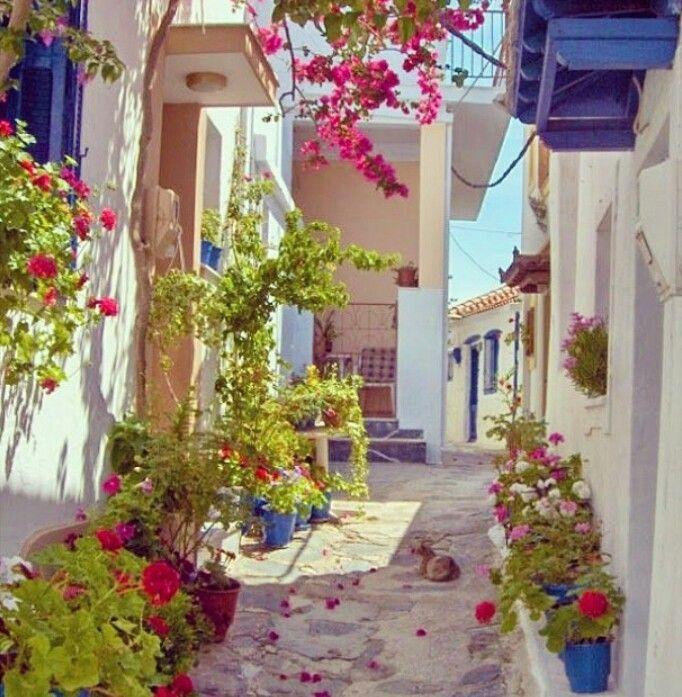 Rua florida