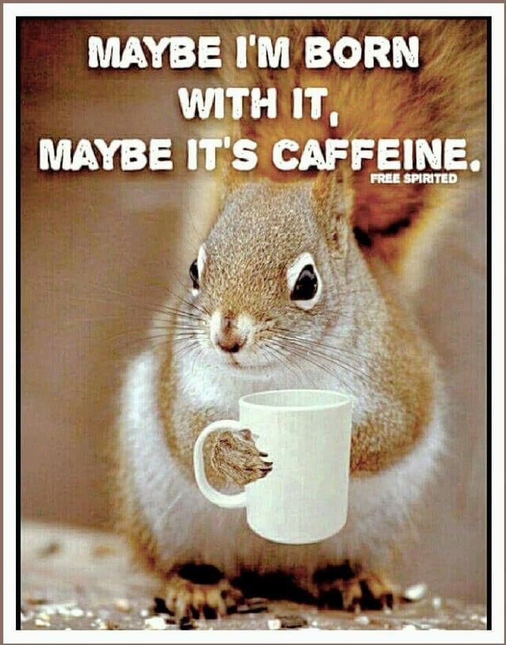Pin by Theresa Dosh on All Things Coffee Coffee humor
