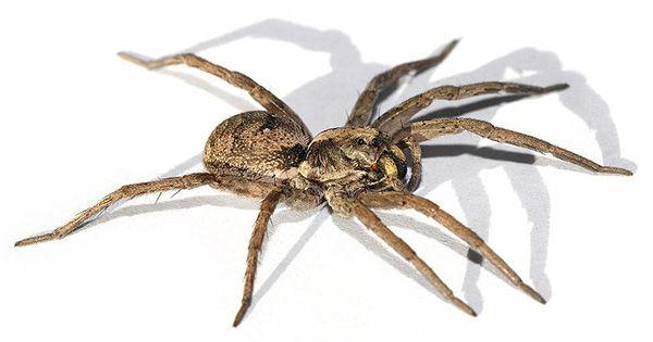 8 trucs naturels contre les araign es household. Black Bedroom Furniture Sets. Home Design Ideas