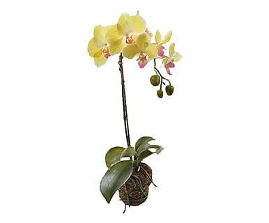 Kunstplant Orchid, H 49 cm