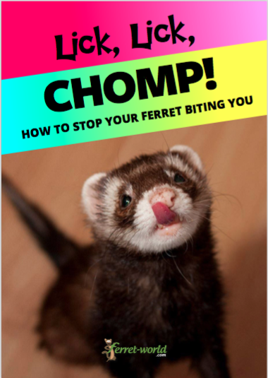 How Much Do Ferrets Cost Get Updated Info On Ferret