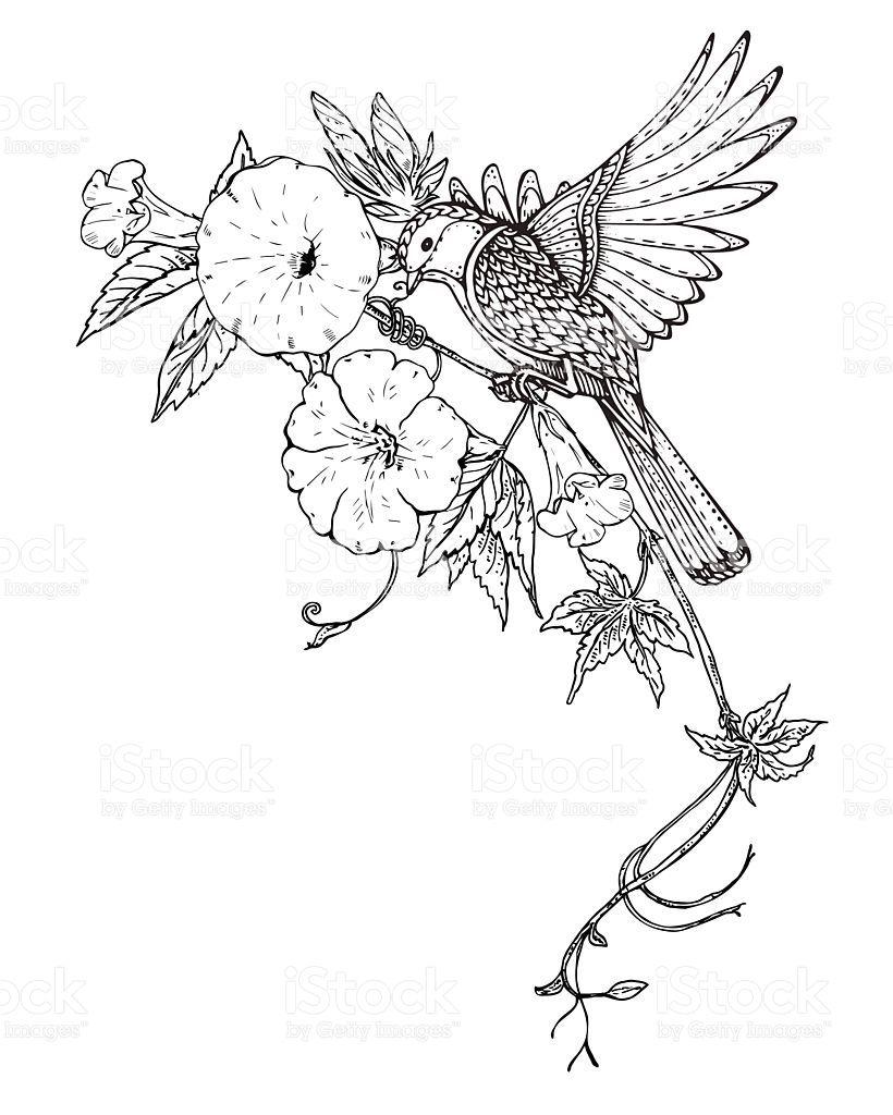 Vector Illustration Of Hand Drawn Graphic Bird On Bindweed Flower