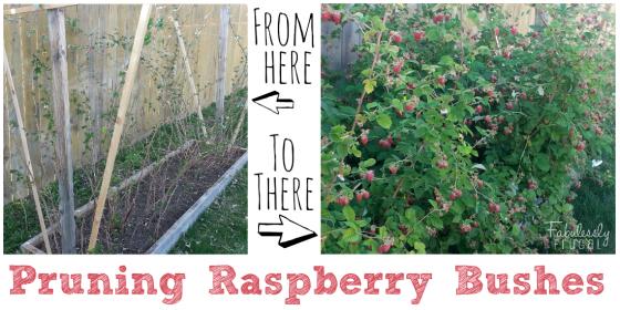 Cleaning Garden Pruning Raspberries Pruning Raspberries Growing Raspberries Raspberry Bush