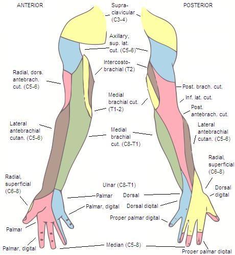Uncovertebral Joint Arthrosis Google Sgning Lupus Pinterest