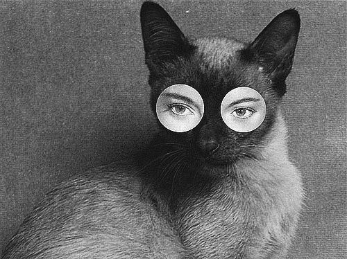 cat woman...hey, you thought of this first!