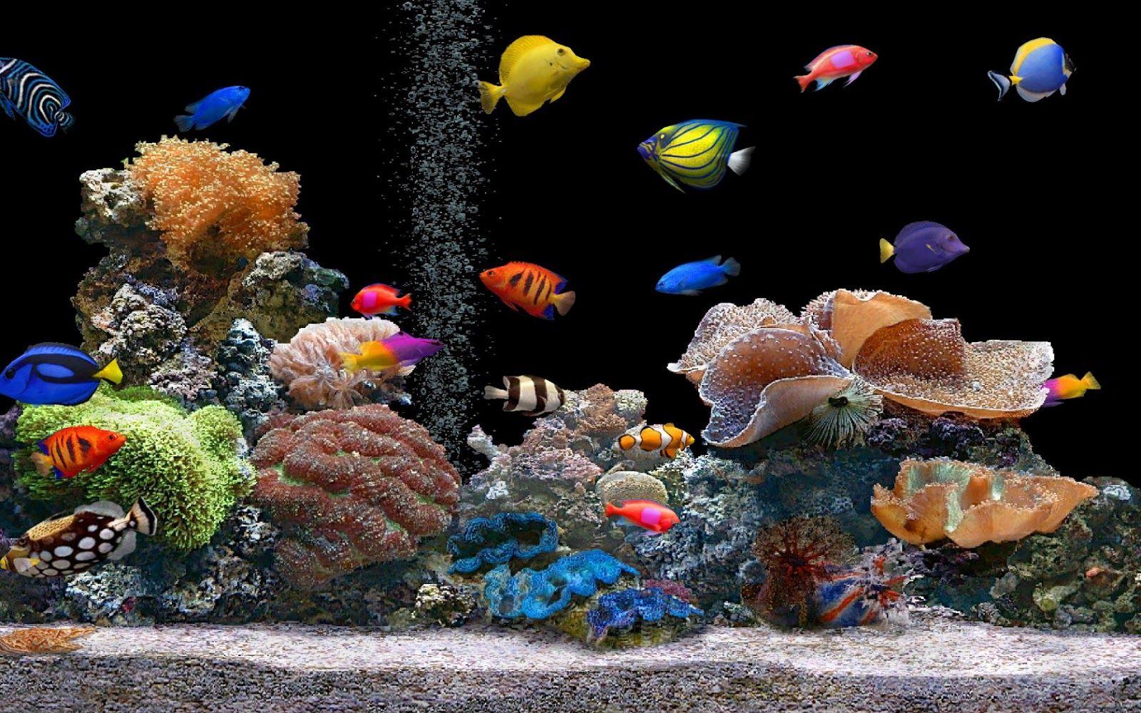 Free Download Aquarium Live Wallpaper For Pc U2013 Aquarium Image Idea Fish Wallpaper Aquarium Live Wallpaper Saltwater Fish Tanks