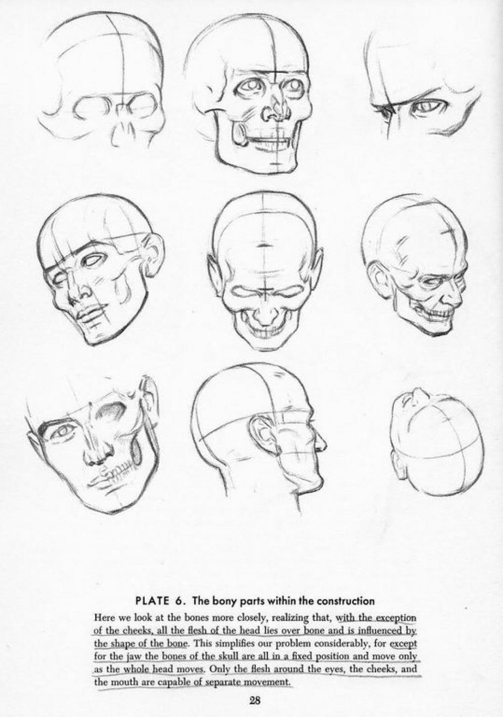 Art By Andrew Loomis Blog Info Https En Wikipedia Org Wiki Andrew Loomis Character Exercicios De Desenho Desenhos De Pessoas Como Desenhar Maos