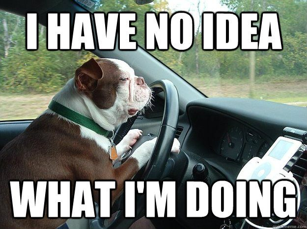Collection Of Funny Driving Quotes And Car Memes Funny Driving Quotes Driving Quotes Driving Humor