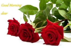 Collection Of Best Good Morning Cards Hd Beautiful Rose Flowers Love Rose Flower Red Roses Wallpaper