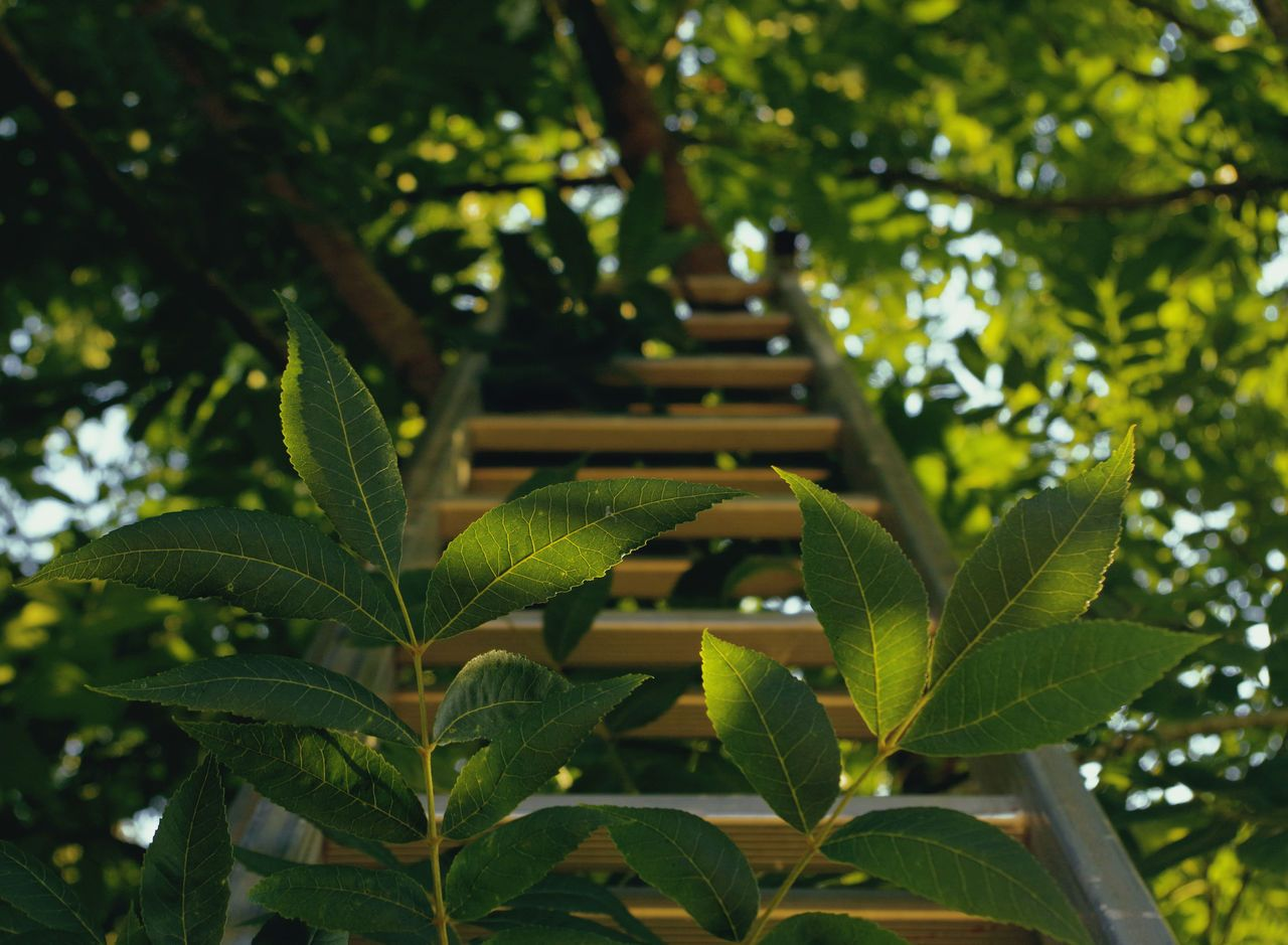 leaf, growth, green color, tree, low angle view, close-up, plant ...