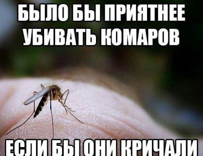 затяжные картинки с фразами про комаров смешные произносить заговоры так