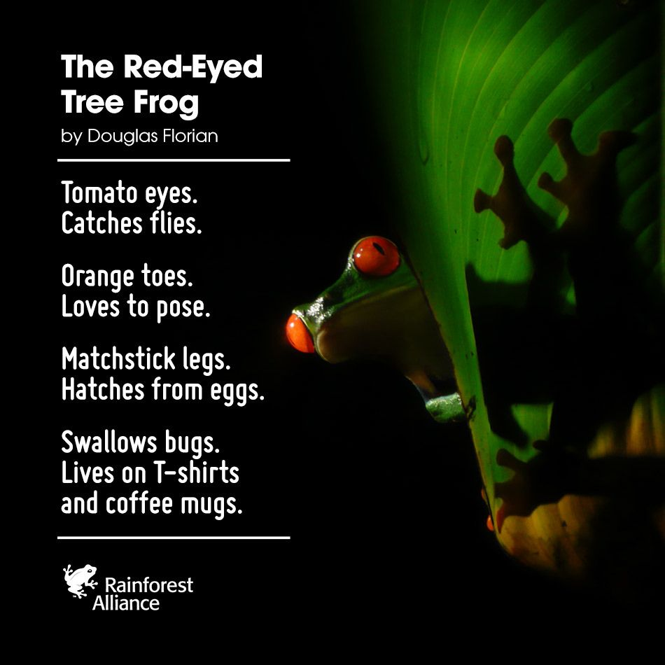 We Feel Like This Poem Has Rainforest Alliance Written All Over It Wild Things Pinterest