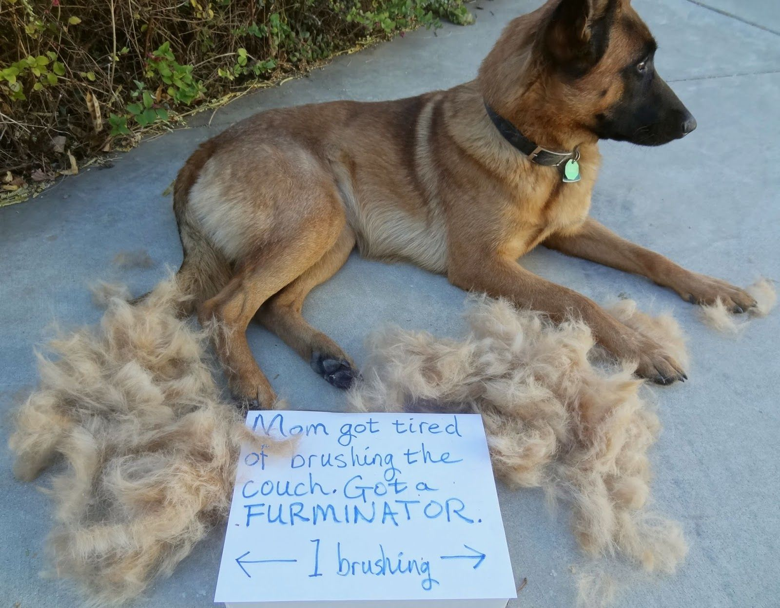Furminator deshedding tools for dogs dogs deshedding