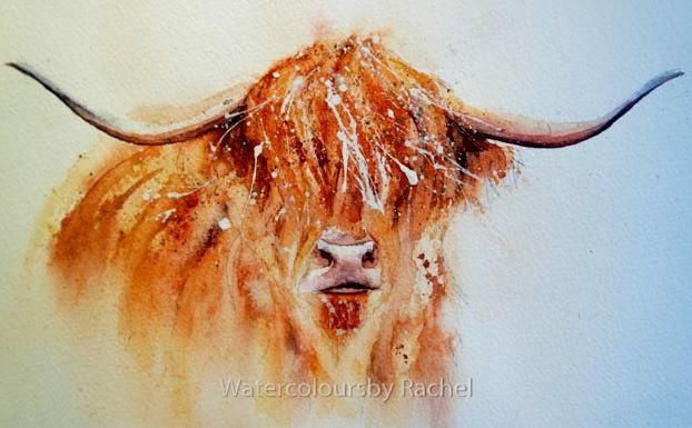 How to paint a highland cow in 7 easy steps is part of Highland cow painting, Cow painting, Cow art, Cow drawing, Highland cow, Easy watercolor - I love painting these shaggy haired creatures, who seem to have a personality all their own  Step I Draw your cow Step 2 I paint the tightest parts first so I begin with his nose ( there are no eyes to paint on this beast!) Thinking carefully about lights and darks , I like to add blues to the pinks  Step 3 Next is the horns, there are many more colours in there than you think  and remember to add shading so they have that nice 'rounded' feel  Step 4 Now the fun begins    water lots of it and flood the hairy bits with water and an under painting of yellow Step 5 Here you can be as mad or restrained as you like   I like to think about what makes the animal you are painting what it it is  A bird it maybe the wings, a zebra it's the stripes a highland cow it's the shaggy coat  So I want to emphasize that in the piece, I add colour take it away, spray the piece with water, splatter, flick turn it upside down and generally make a mess, but always looking at what is happening if you like it ,keep it ,if not blot it out  Practice and see what happens     Step 6 I also want to give an impression of the rest of the cow  Same as the head really but fainter so I paint it then fade the colour away with lots of water, it gives the head the focus Step 7 Almost there, let it dry then you can add more splatters, and I like to add some gold ink and white acrylic flicks and splatters to finish the whole piece off