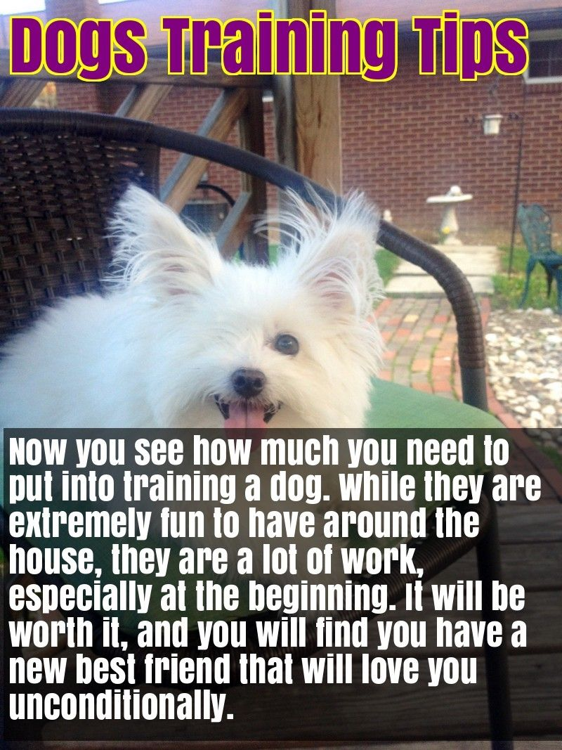 Advice Everyone Should Know About Caring For Dogs Dog Training Dogs Dog Training Tips