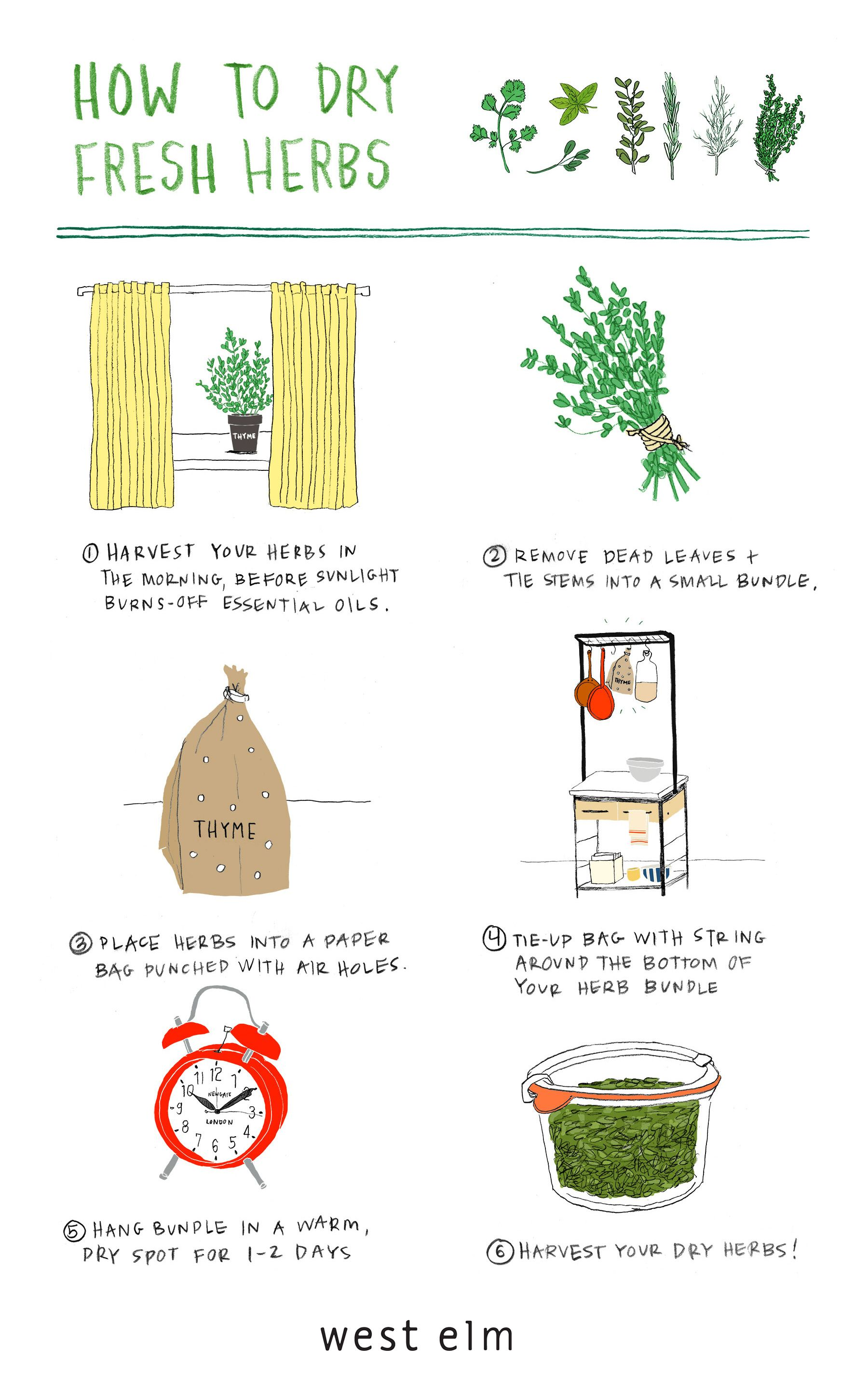 How To Dry Fresh Herbs Front Main A Blog From West Elm Drying Fresh Herbs Herbs Illustration Witch Herbs