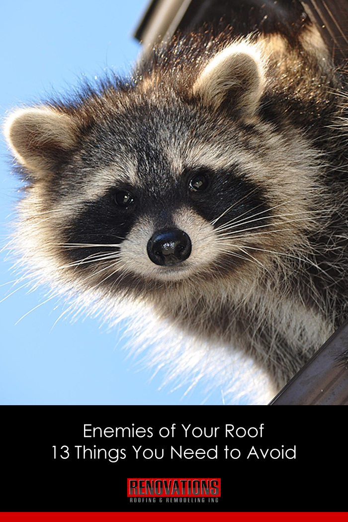 Enemies Of Your Roof 13 Things You Need To Avoid Cute Animals Weird Animals Pet Rats