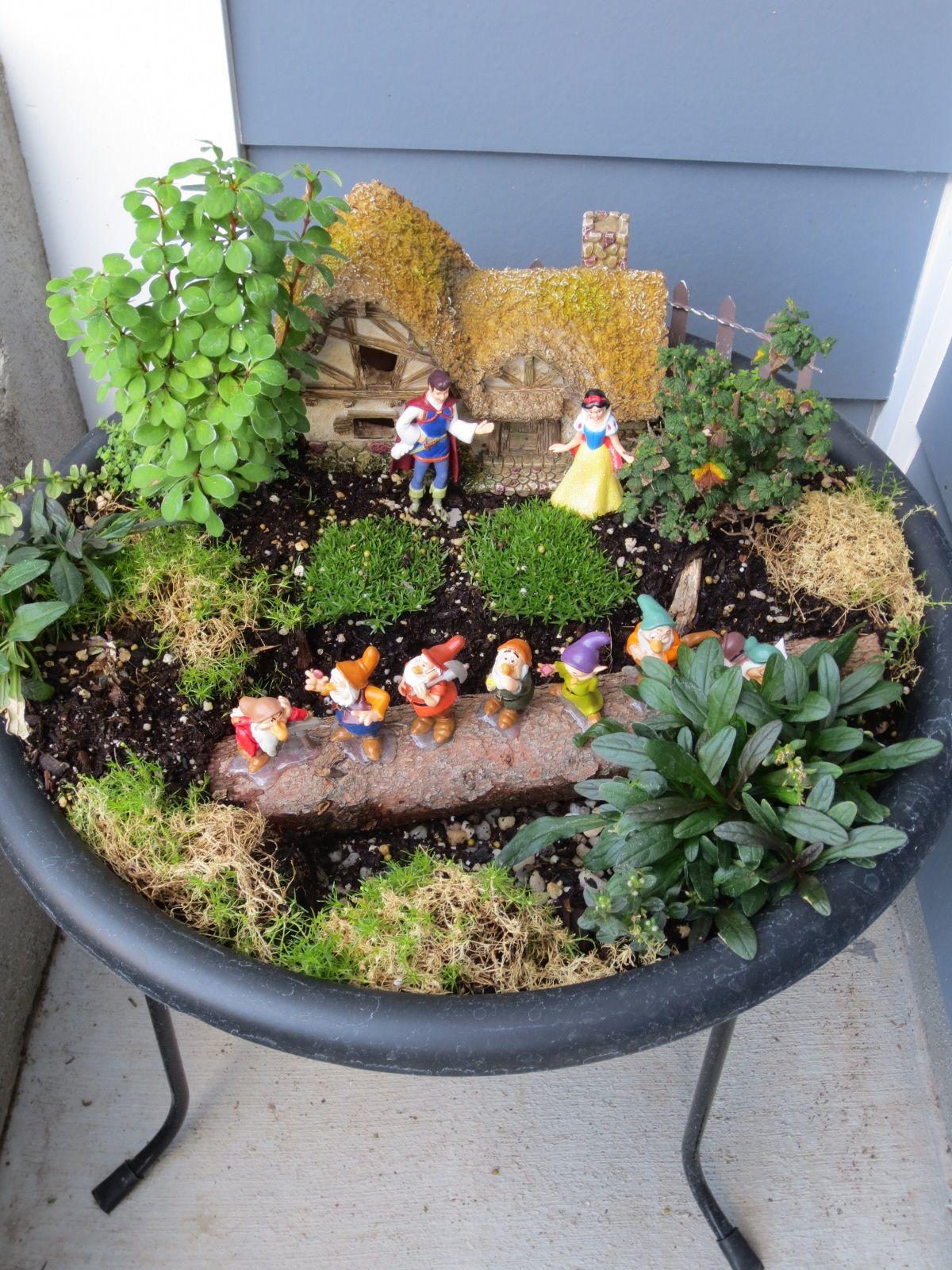 Snow White And The Seven Dwarfs Miniature Fairy Gardens Fairy Garden Plants Fairy Garden