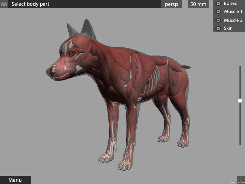 3d app animal anatomy horse dog chimp muscles ipad iphone https ...