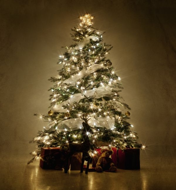 Download Free Christmas Trees Decorated With Ribbon Pictures