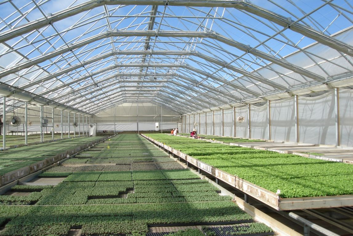Commercial greenhouse continental natural ventilation for Gothic greenhouse plans
