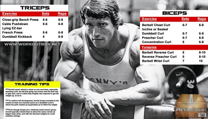Arnold biceps and triceps workout routine schwarzenegger plan arnold biceps and triceps workout routine schwarzenegger plan malvernweather Image collections