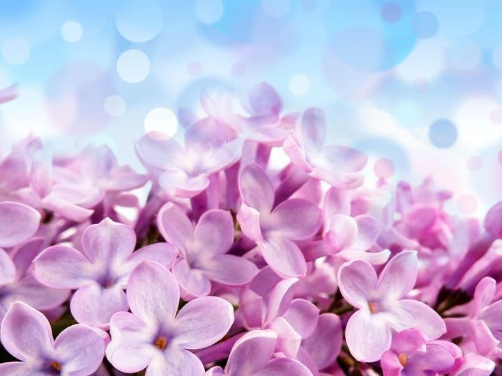 Wiosna Free Flower Wallpaper Flower Wallpaper Hd Nature Wallpapers