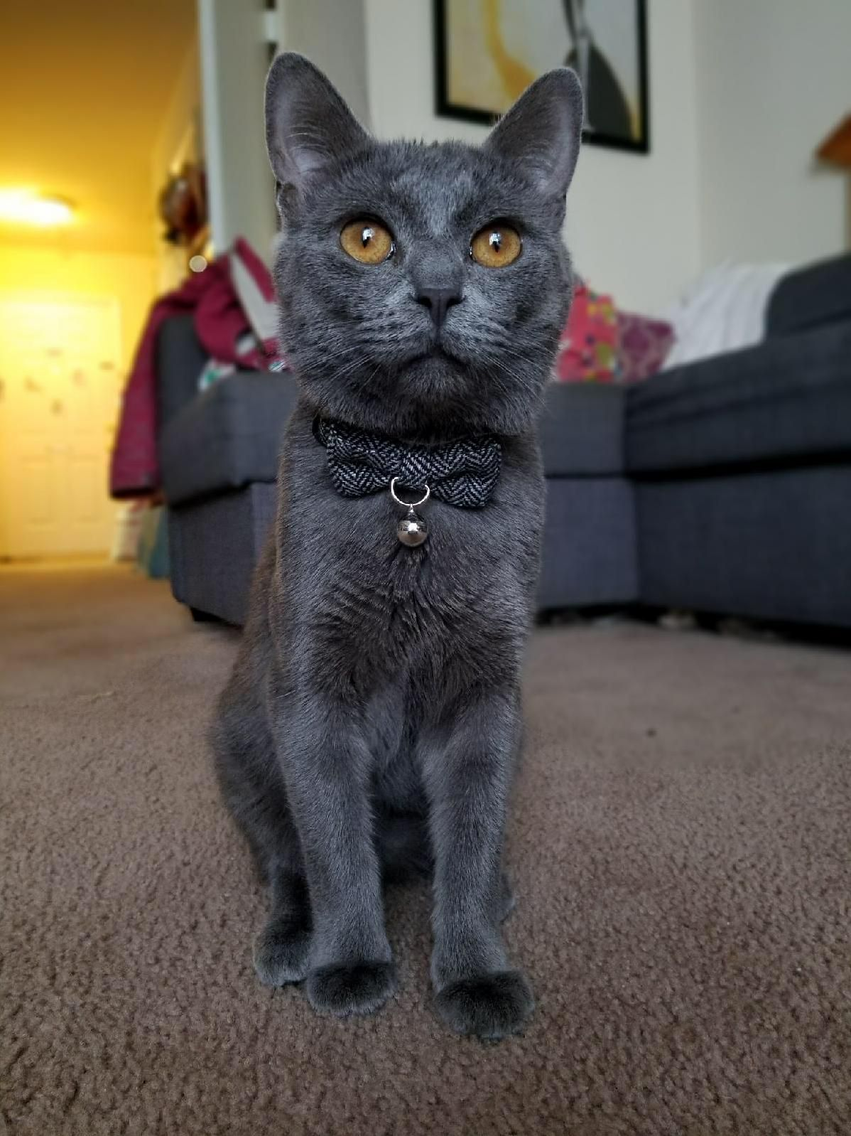 My Sisters Cat Is A Handsome Dude With Images Cute Cats And Kittens Cute Cats Kittens Cutest