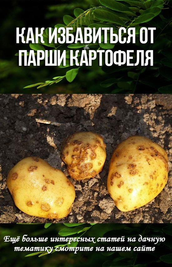 как избавиться от парши на картофеле советы