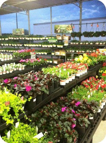 Garden Center At Walmart Com Imagens Floriculturas Estufas