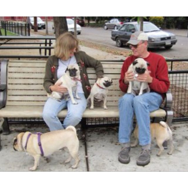 I will one day be the woman who owns five pugs
