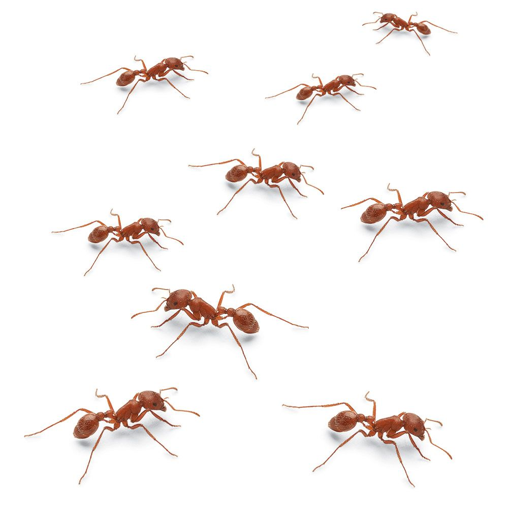 How To Get Rid Of Ants In Your House And Yard Rid Of Ants Get Rid Of Ants Types Of Ants