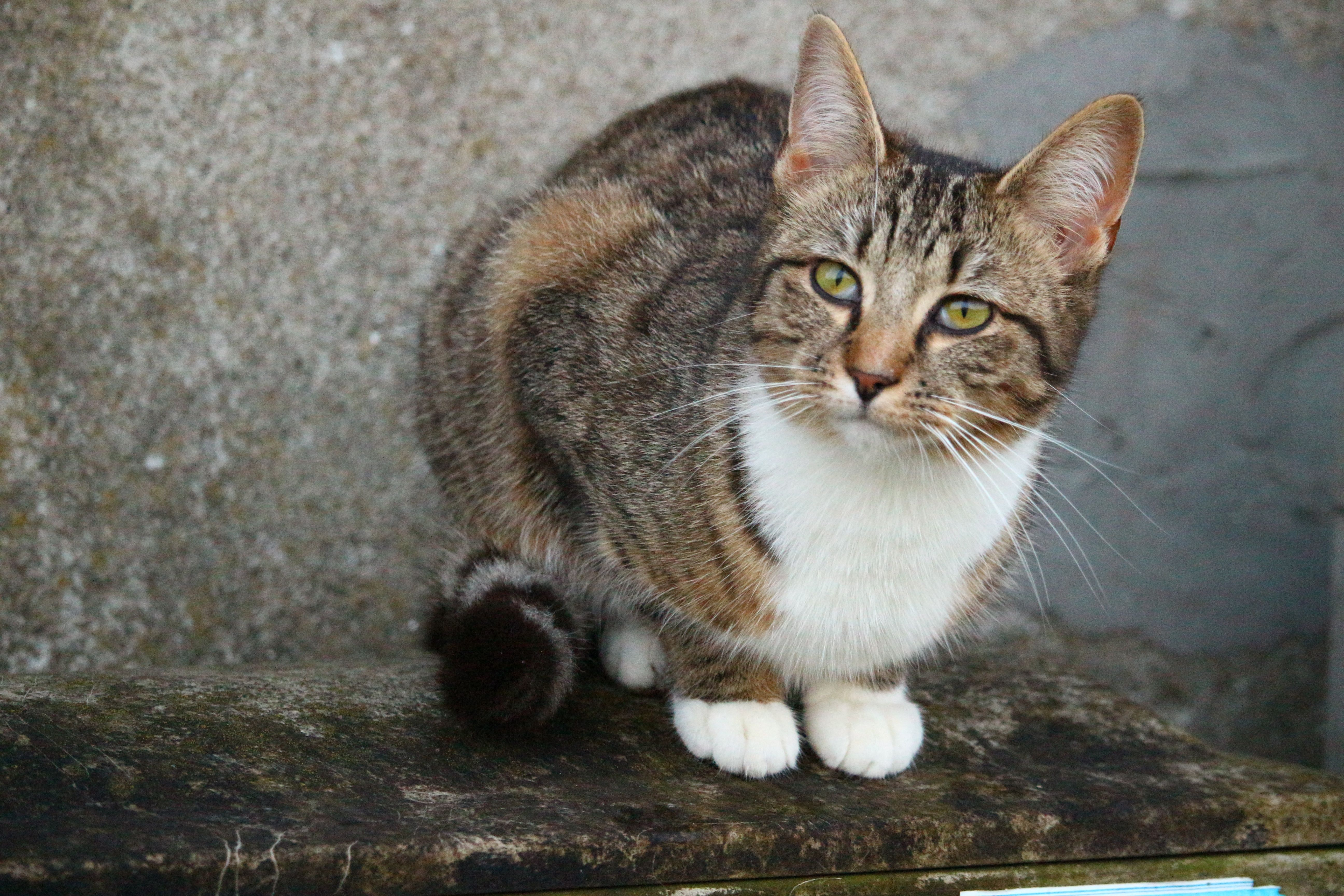 In the Shadows. Cat breeds, Cats, Kittens