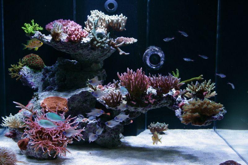 Tips And Tricks On Creating Amazing Aquascapes Reef Aquarium Reef Tank Aquascaping Saltwater Aquarium Fish