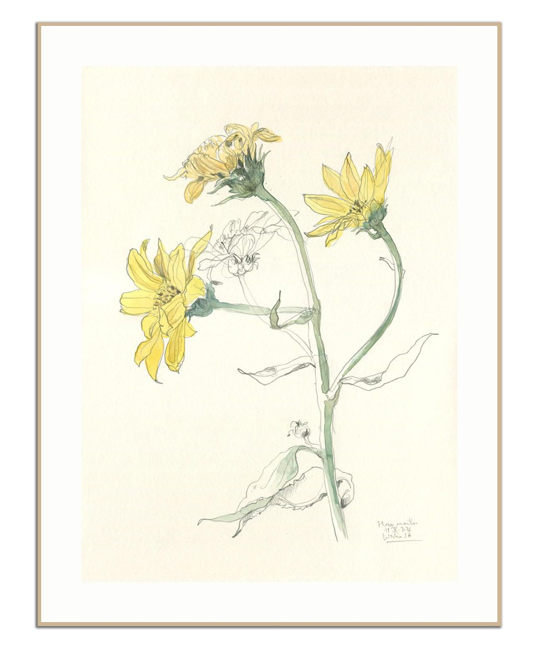 Yellow Flowers Print Pencil And Watercolour After Yellow Flowers