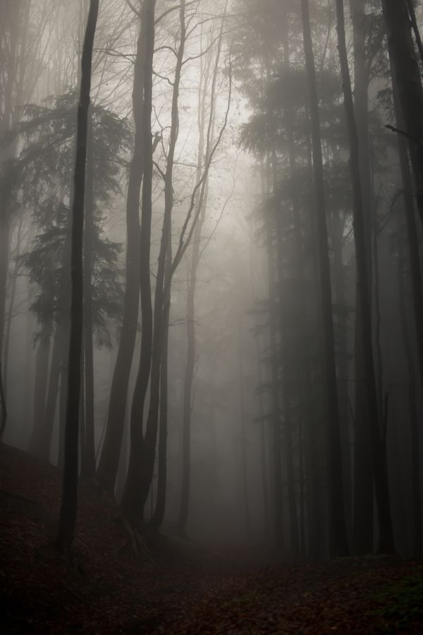 Stopping by Woods by Kathrin Loges und Jan Wunderlich