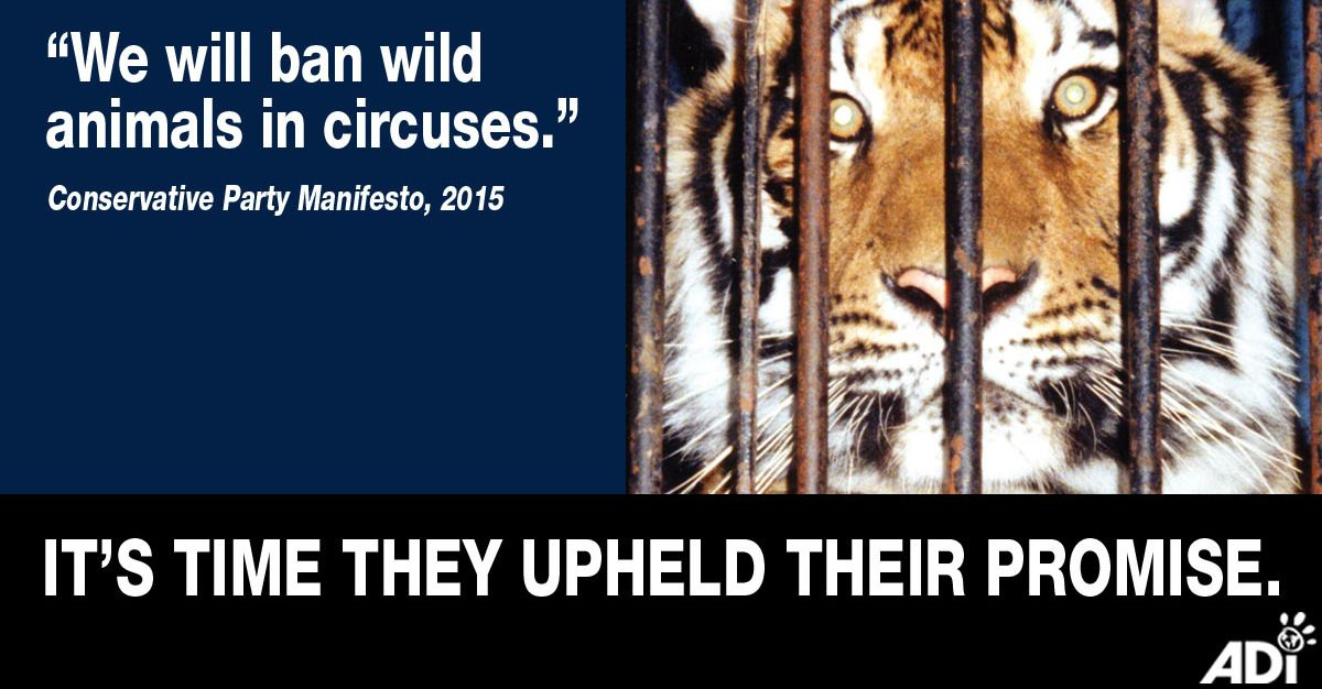 URGENT! Please Support & Share ADI's Thunderclap to Stop Circus Suffering in England!