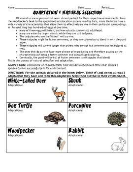 Adaptations and Natural Selection HW/Worksheet | Define natural ...