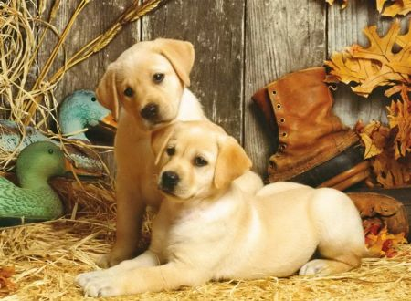 hunting dogs - dogs wallpaper id 1615760 - desktop nexus animals