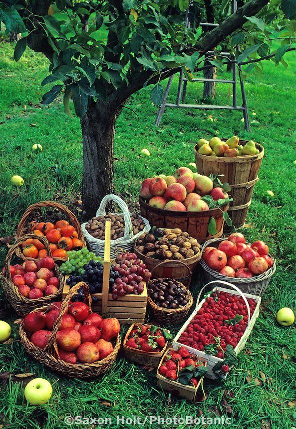 ... autumn autumn leaves basket of fruit berry baskets autumn garden apple