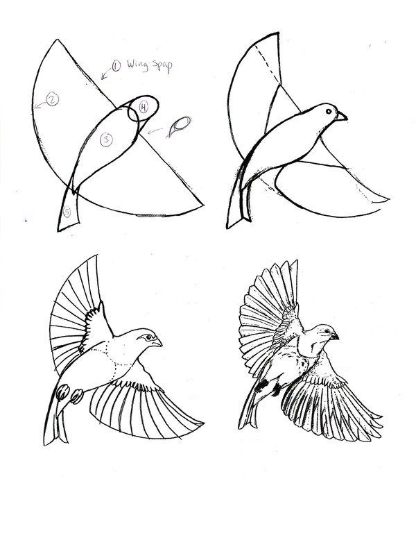 How To Draw A Bird Flying Easy : flying, Practice, 9facts, Drawings,, Drawings