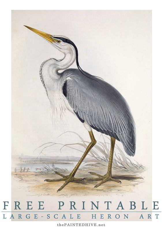 Free Printable Large Scale Bird Art Heron Art Free Printable Wall Art Free Printable Art