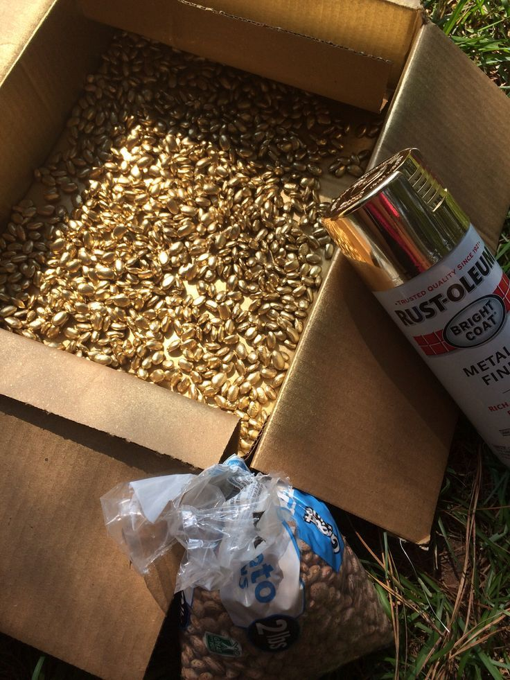Spray pinto beans with gold spray paint. Cheap vase filler, fill ...