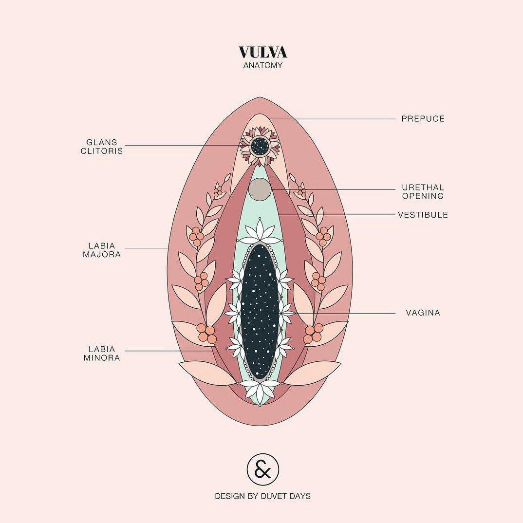 Clitoris vulva art photo gallery
