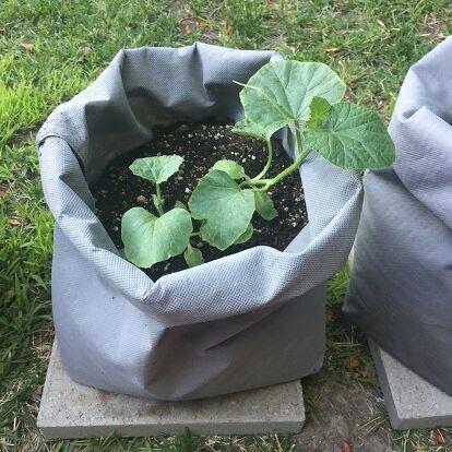 How To Make Diy Fabric Grow Bags Diy Grow Bags Grow 640 x 480