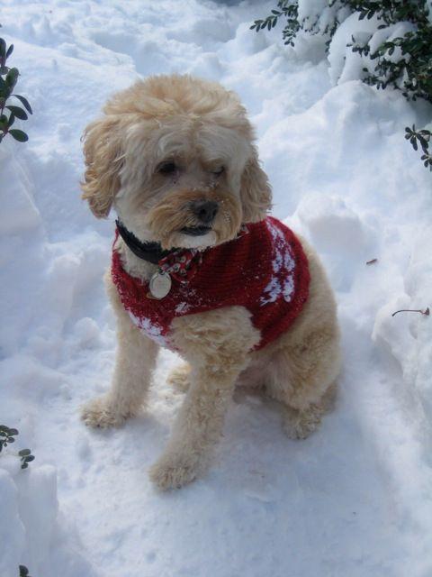 Snowflake Dog Sweater Fur Babies Pinterest Dog Sweaters Dog